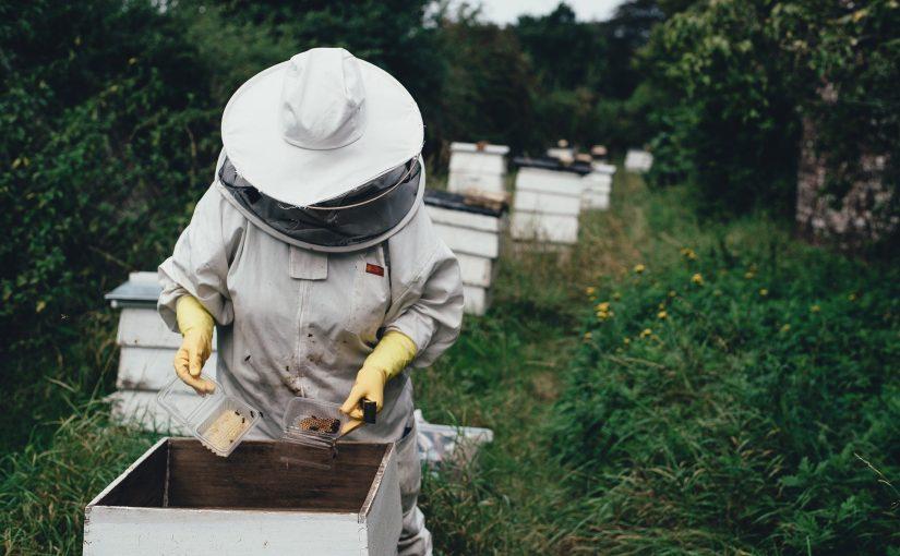 Pourquoi l'apiculteur doit venir nourrir les abeilles ?